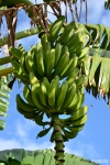 Food_Banane