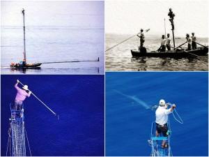 Swordfish capture