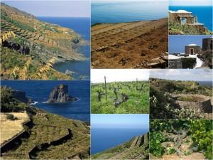 Pantelleria_Vite ad alberello