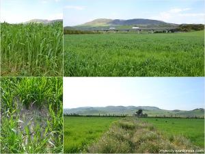 Nature_April_Timilia field