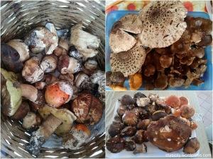 Randazzo_funghi