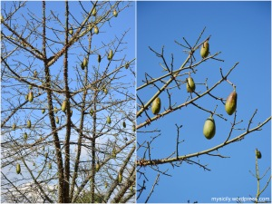 palermo_albero
